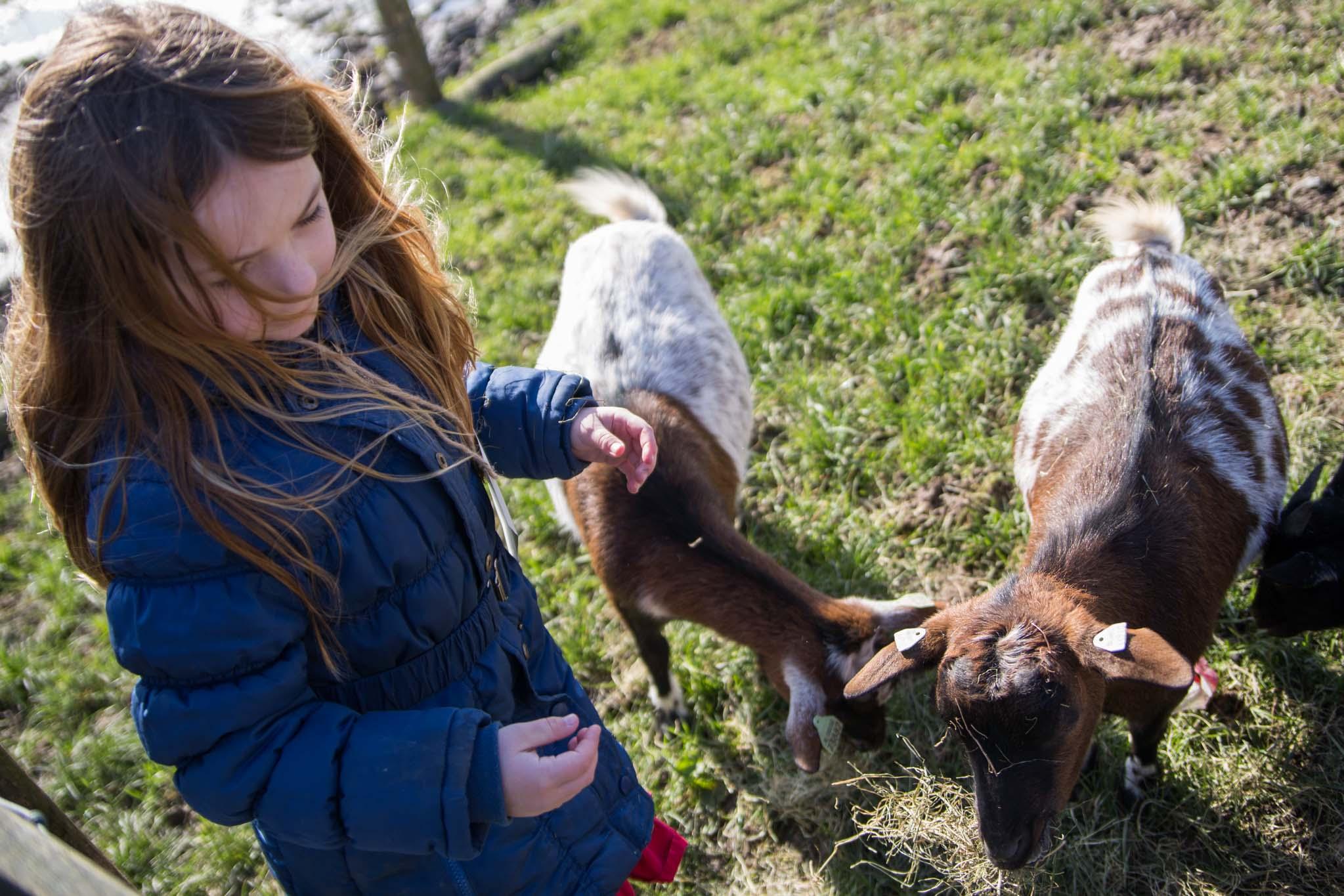 boerderij De Zonnewijzer Open dag geiten voeren