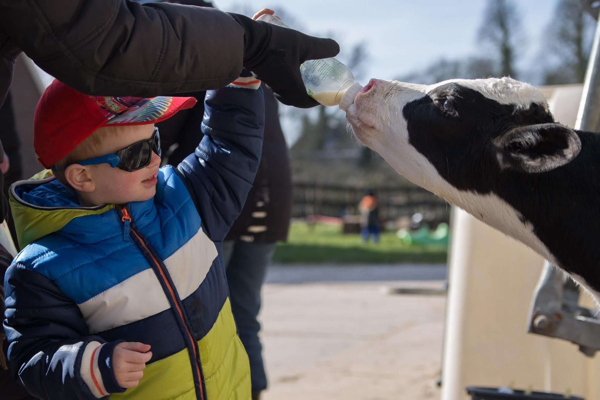 boerderij De Zonnewijzer Open dag kalf melk geven