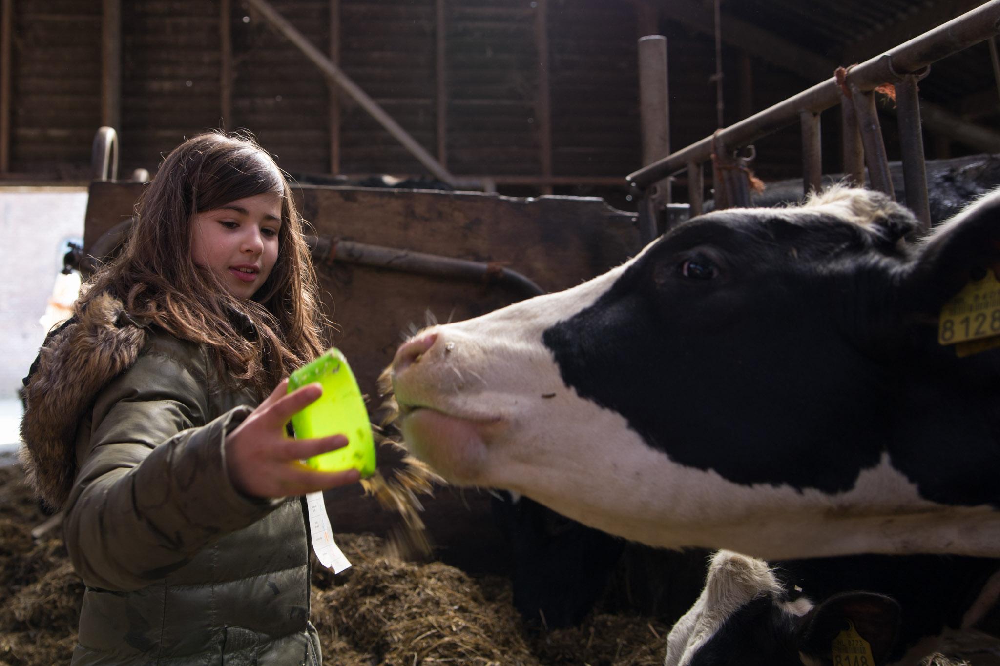 boerderij De Zonnewijzer Open dag koe voer geven