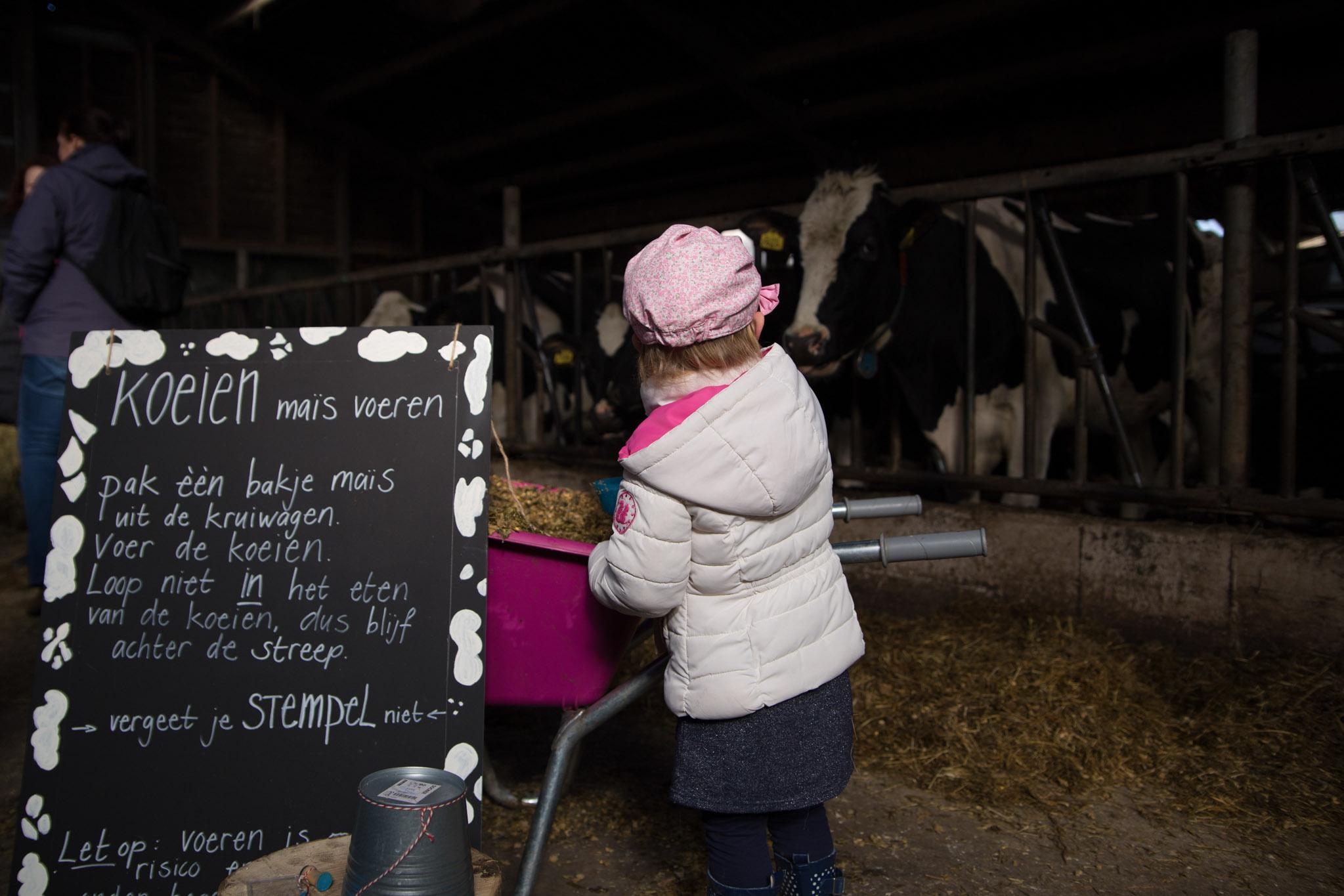 boerderij De Zonnewijzer Open dag koeien voeren