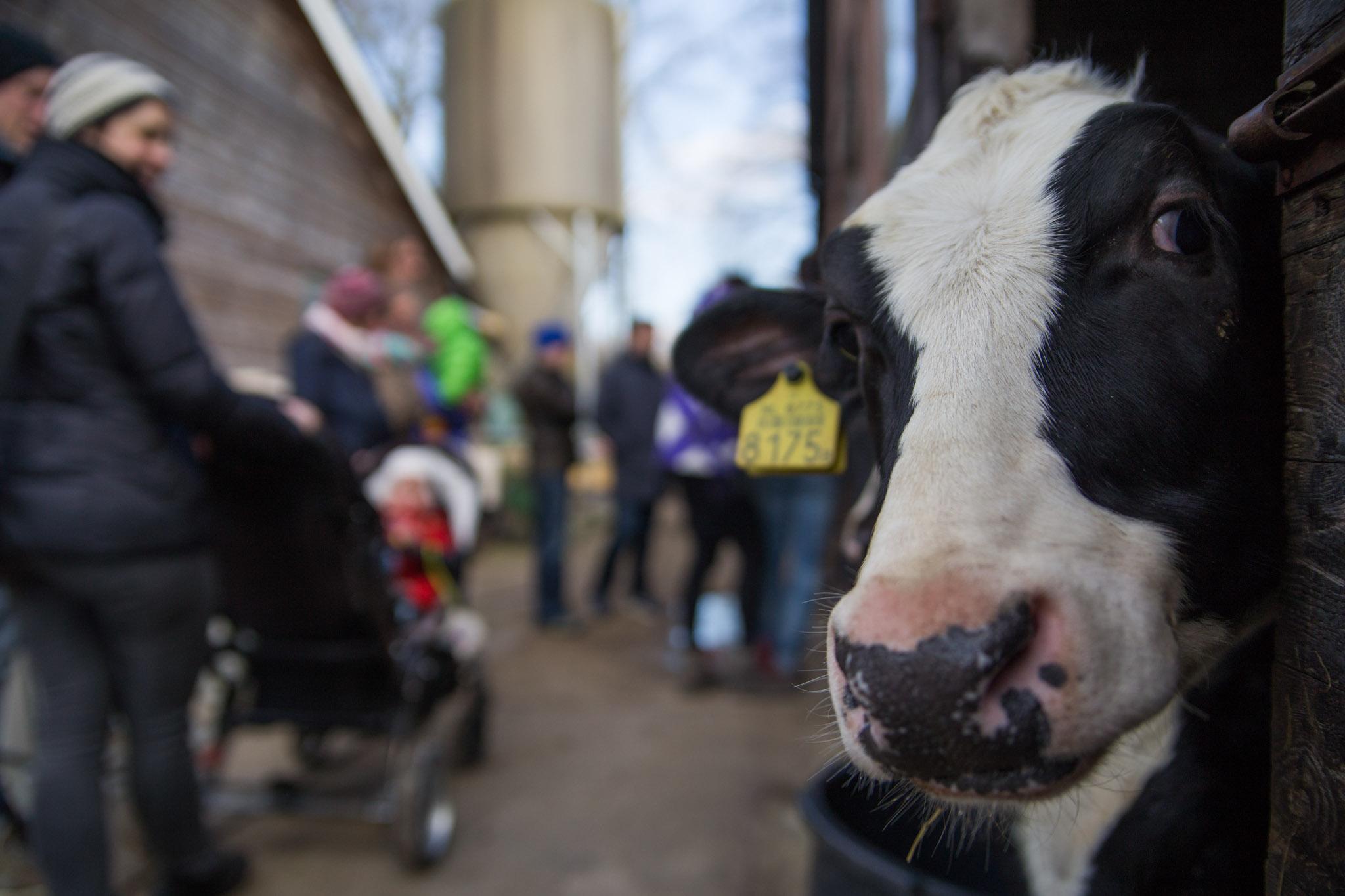 bezoekers bij Open dag van boerderij De Zonnewijzer portfolio Wijgert-Jan van As